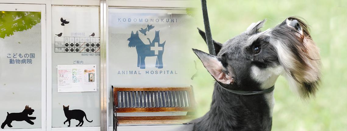 こどもの国動物病院